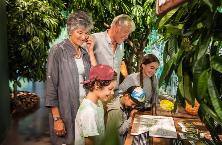Der Kakaobaum liefert den wichtigsten Rohstoff für Schokolade